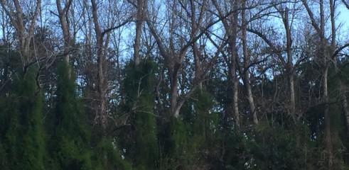 Forestry Mulcher 4