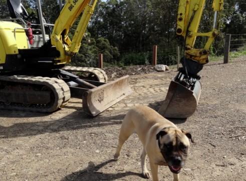 5.5 ton Yanmar Excavator 1