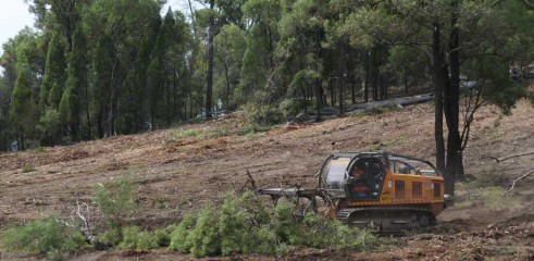 Dropping Iron Bark - Land Clearing 10