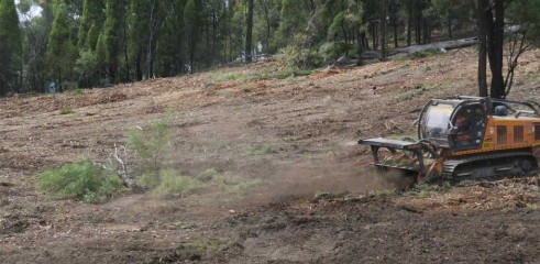 Dropping Iron Bark - Land Clearing 11