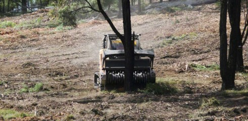 Dropping Iron Bark - Land Clearing 1