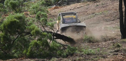 Dropping Iron Bark - Land Clearing 3
