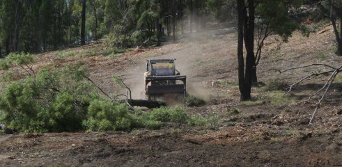 Dropping Iron Bark - Land Clearing 4