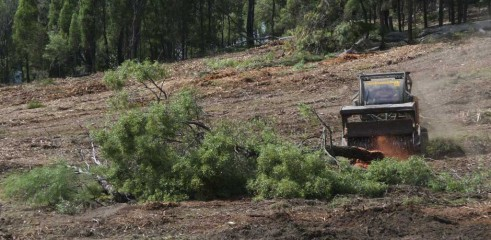 Dropping Iron Bark - Land Clearing 5