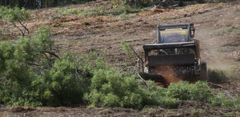 Dropping Iron Bark - Land Clearing 6