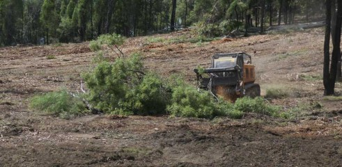 Dropping Iron Bark - Land Clearing 7