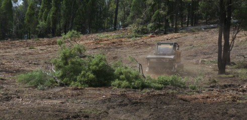 Dropping Iron Bark - Land Clearing 8