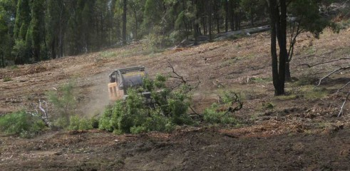 Dropping Iron Bark - Land Clearing 9