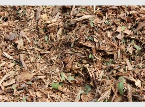 Forest Litter 1