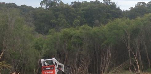 Forestry Mulching 6