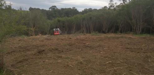 Forestry Mulching 7