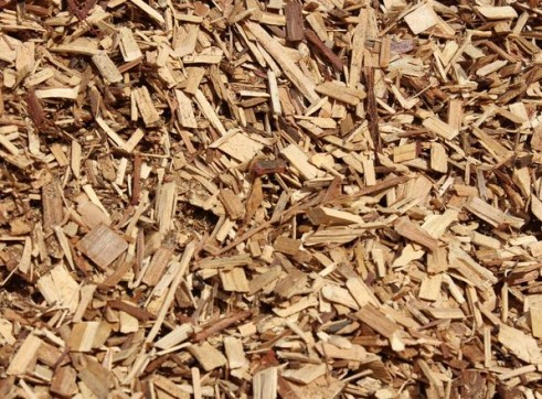 Golden Cypress Chips 2