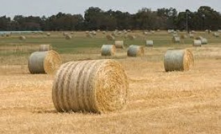 Hay Balers - Square 8x4x3, Round 4x4/4x3 and small square 1