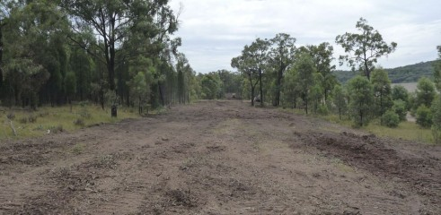 Land Clearing with 450HP Forestry Mulcher 5