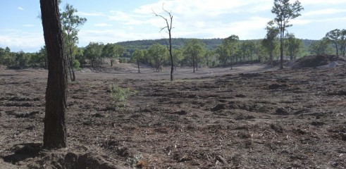 Land Clearing with 450HP Forestry Mulcher 9