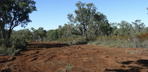 Land Clearing with Forestry Mulcher 4