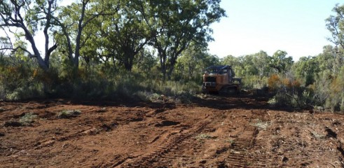 Land Clearing with Forestry Mulcher 5