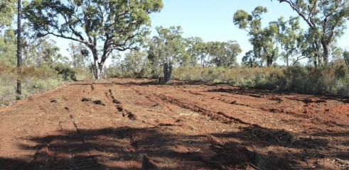 Land Clearing with Forestry Mulcher 6