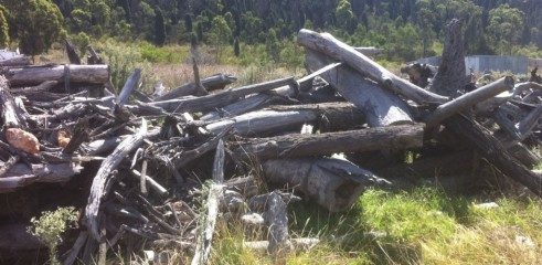 Land Clearing with Tracked Mulcher 2