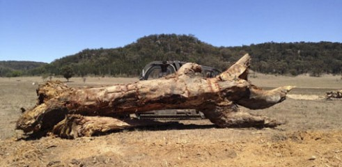 Land Clearing with Tracked Mulcher 7
