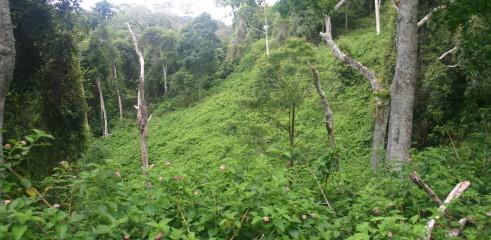 Lantana Eradication Queensland 1