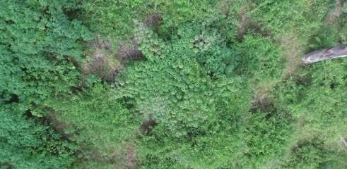 Lantana Eradication Queensland 3