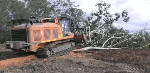 Mulching Gum Trees 1