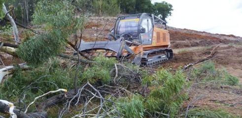 Mulching Gum Trees 3