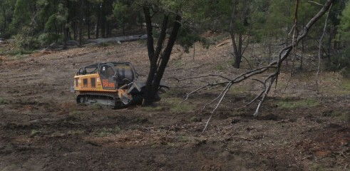 Mulching Ironbark Trees - Land Clearing 1