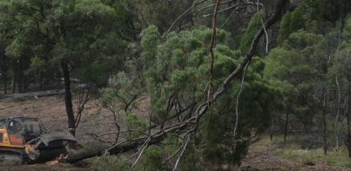 Mulching Ironbark Trees - Land Clearing 2