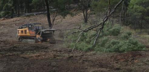 Mulching Ironbark Trees - Land Clearing 3