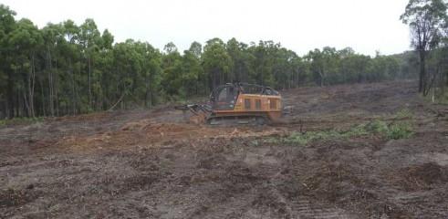 Mulching Tree - Land Clearing 10