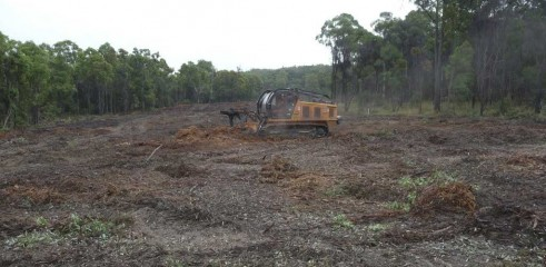 Mulching Tree - Land Clearing 11
