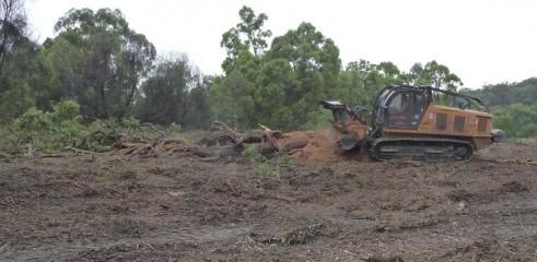 Mulching Tree - Land Clearing 2