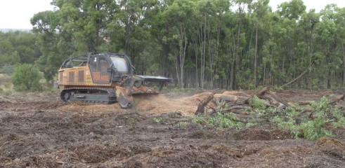 Mulching Tree - Land Clearing 3
