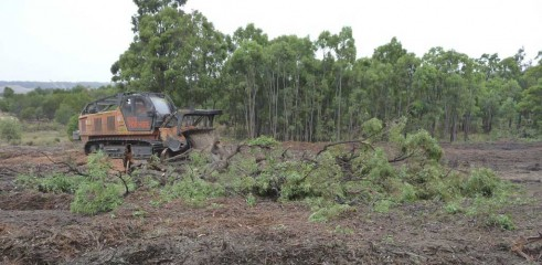 Mulching Tree - Land Clearing 5