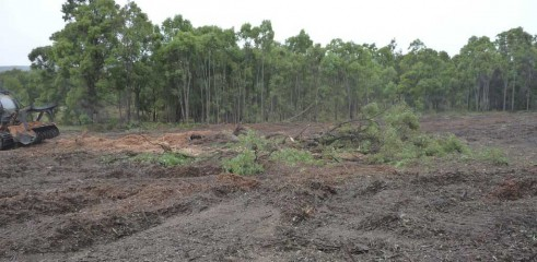 Mulching Tree - Land Clearing 6