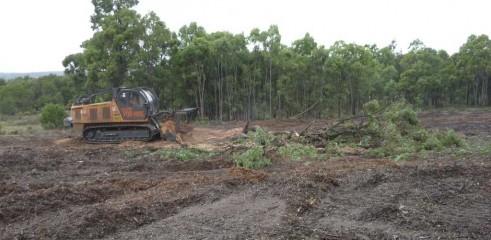 Mulching Tree - Land Clearing 7