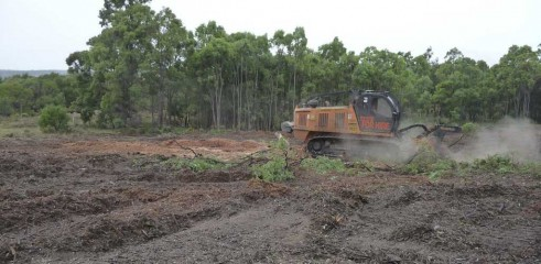Mulching Tree - Land Clearing 8