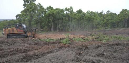 Mulching Tree - Land Clearing 9