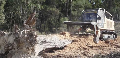 Mulching Tree with 450HP Forestry Mulcher 11