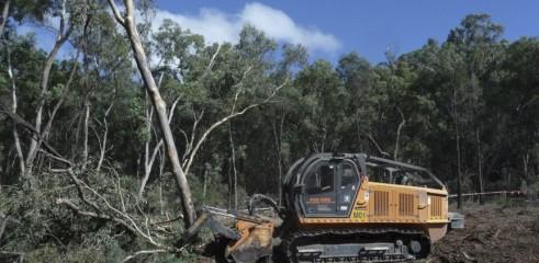 Mulching Tree with 450HP Forestry Mulcher 3