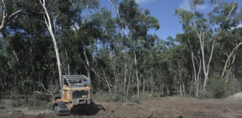 Mulching Tree with 450HP Forestry Mulcher 4