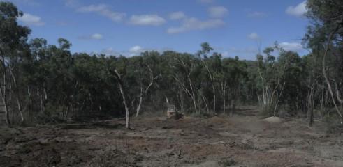 Mulching Tree with 450HP Forestry Mulcher 5