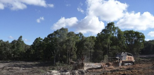 Mulching Tree with 450HP Forestry Mulcher 6