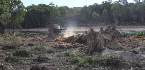 Mulching Tree with 450HP Forestry Mulcher 8
