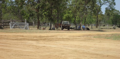 Pad | Cattle Loading Area | Mooney Station 3