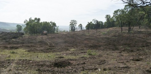 Paddock Clearing 2