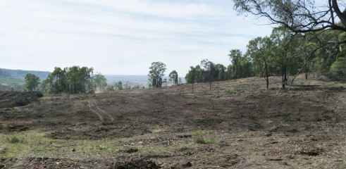 Paddock Clearing 3