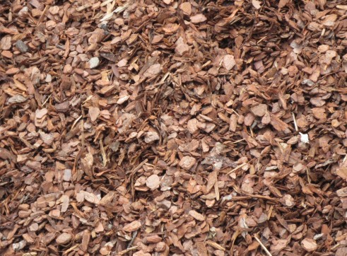 Pine Bark 1 inch 1